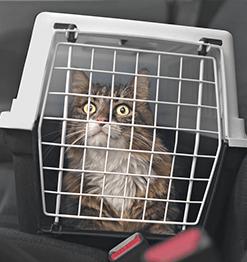 Étiquette bagage et sac transport animal de compagnie